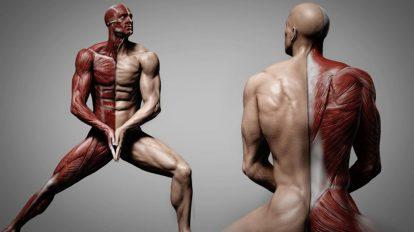 آموزش ساخت آناتومی انسان با زیبراش و فتوشاپ Human Anatomy for Artists