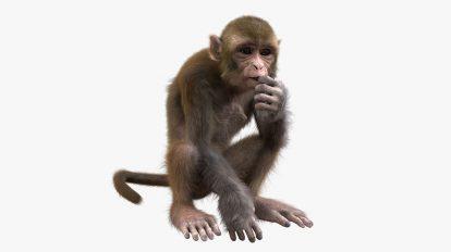 مدل سه بعدی ریگ شده میمون Monkey Fur Rigged
