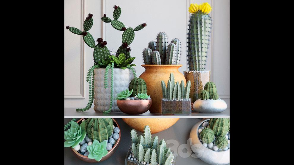 مجموعه مدل سه بعدی گلدان کاکتوس Cacti