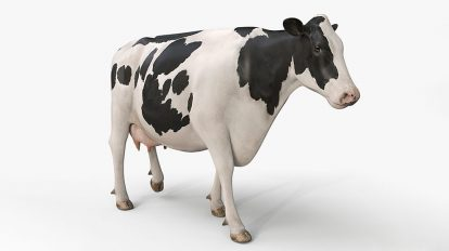 مدل سه بعدی گاو Cow Pro Holstein
