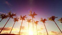 ویدیوی موشن گرافیک طلوع خورشید در زمینه درختان نخل