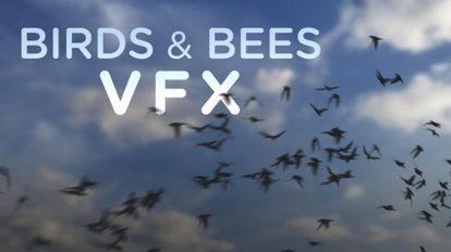 مجموعه فوتیج ویدیویی پرواز پرنده و زنبور Birds & Bees VFX