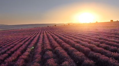 فوتیج ویدیویی هوایی حرکت روی چمنزار طبیعت