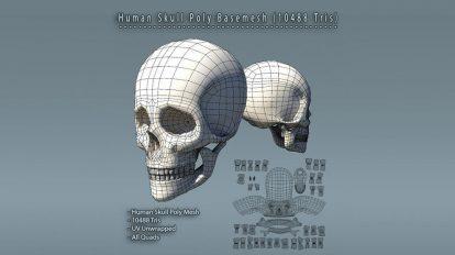 مدل سه بعدی جمجمه انسان Human Skull Polygon Mesh