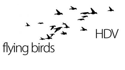 مجموعه ویدیوی موشن گرافیک پرواز پرندگان Flying Birds