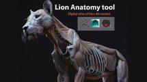 مدل سه بعدی آناتومی شیر Lion Anatomy