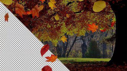مجموعه ویدیوی موشن گرافیک افتادن برگ های پاییزی