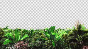 ویدیوی موشن گرافیک حرکت گیاهان استوایی در باد