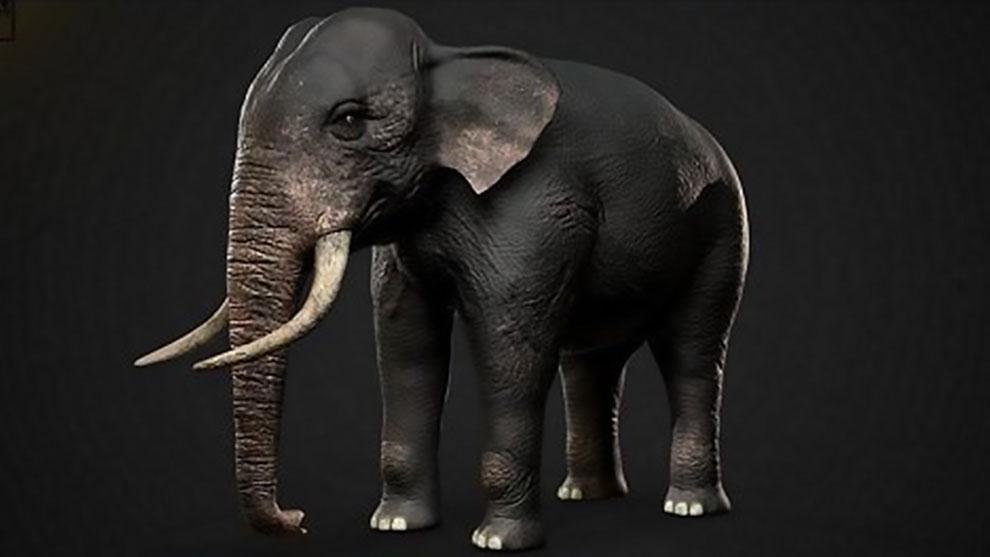 مدل سه بعدی فیل هندی Indian Elephant